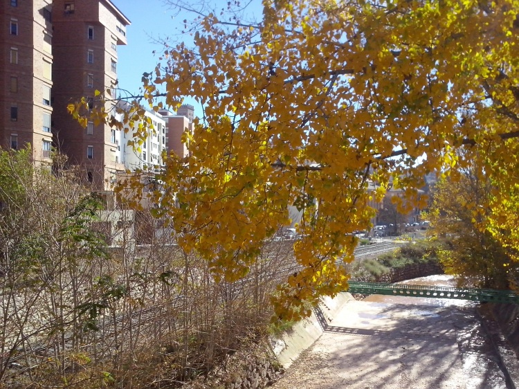 El otoño en el parque fluvial 2