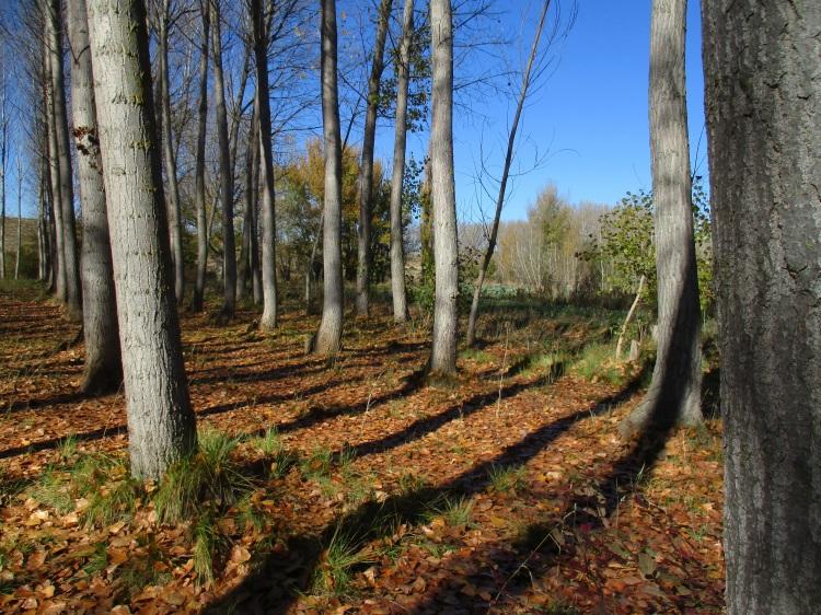 El otoño en las huertas del Alfambra