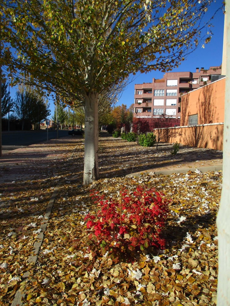 Otoño en Teruel. Ctra. Castralvo