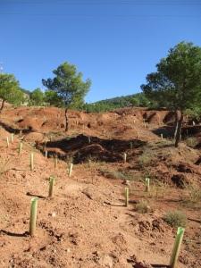 Plantación Los Monotes 2