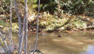 Vida en el parque fluvial patos2