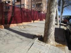plataneros calle Los Enebros 2