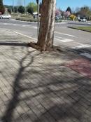 plataneros calle Los Enebros 3