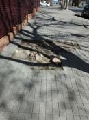 plataneros calle Los Enebros 4