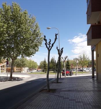 Convivencia árboles y farolas c los Tilos