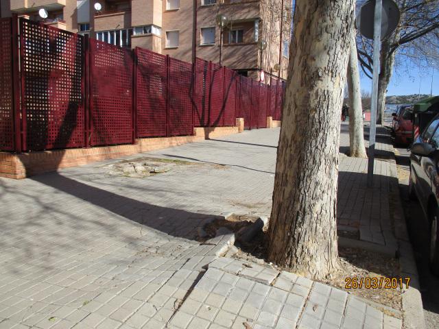 plataneros-calle-los-enebros-2